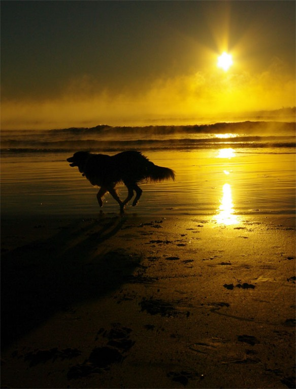 Dog at sunrise