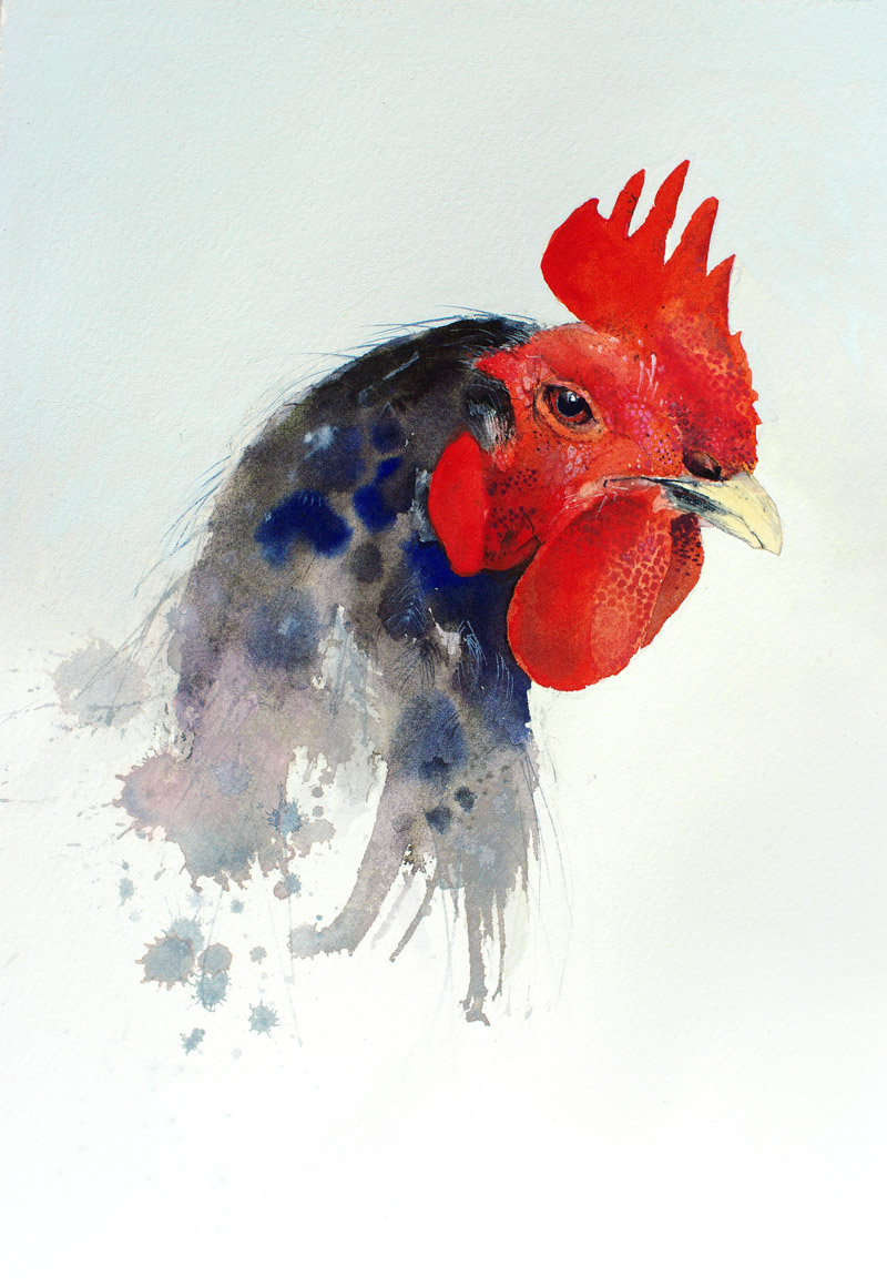 Watercolor Chicken Splashing Paint
