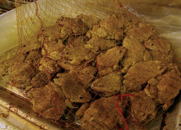 Kok Graa Vaggar : This bag of tasty live toads are also classed as food (and delicious